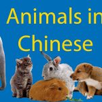 Animals in Chinese: LTL's Ultimate 动物 Encyclopedia   Thumbnail