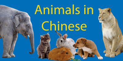 Animals in Chinese: LTL's Ultimate 动物 Encyclopedia