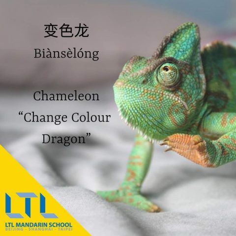 Chameleon in Chinese