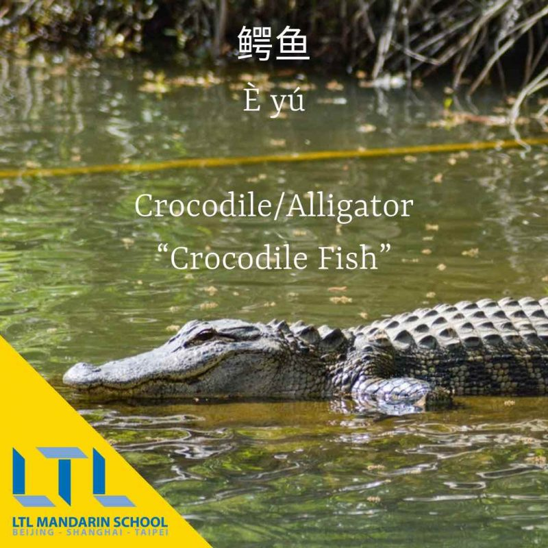 Crocodile in Chinese