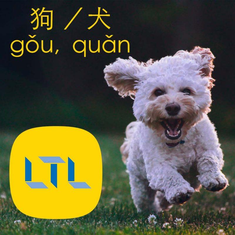 Dogs in Mandarin