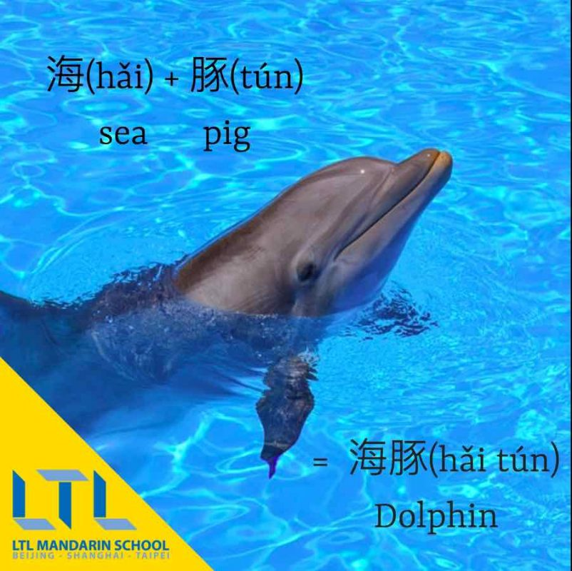 Dolphin in Chinese