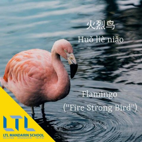 Flamingo in Chinese