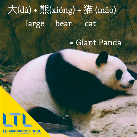 Animals in Chinese - Giant Panda in Chinese