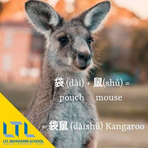 Mandarin Chinese - Kangaroo