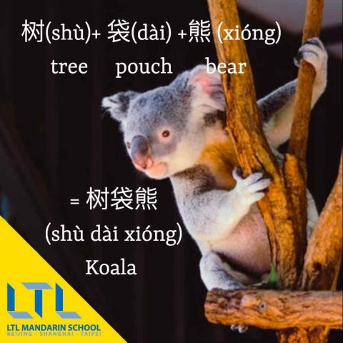 Studying Chinese - Koala