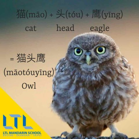 Owl in Chinese