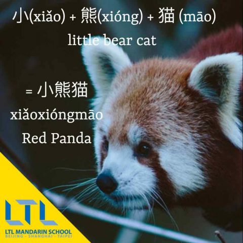 Animals in Chinese - Red Panda