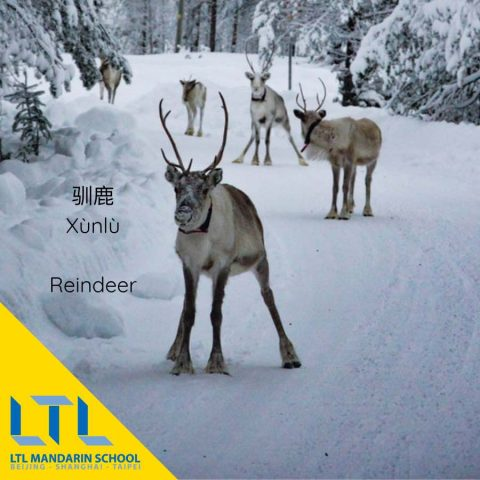 Santa in Chinese and his Reindeer
