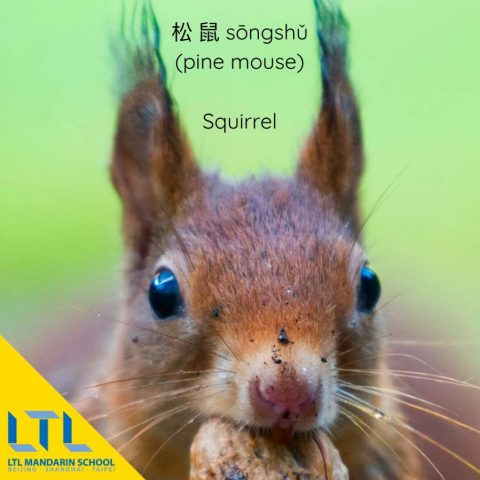 Animals in Chinese - Squirrel in Chinese