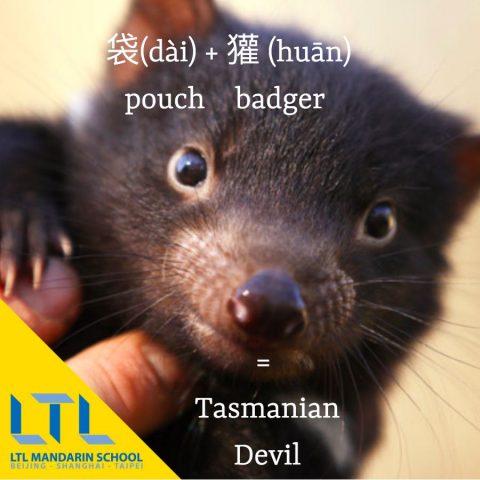 Tasmanian devil in chinese