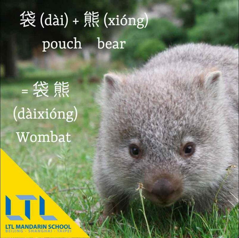 Wombat in Chinese