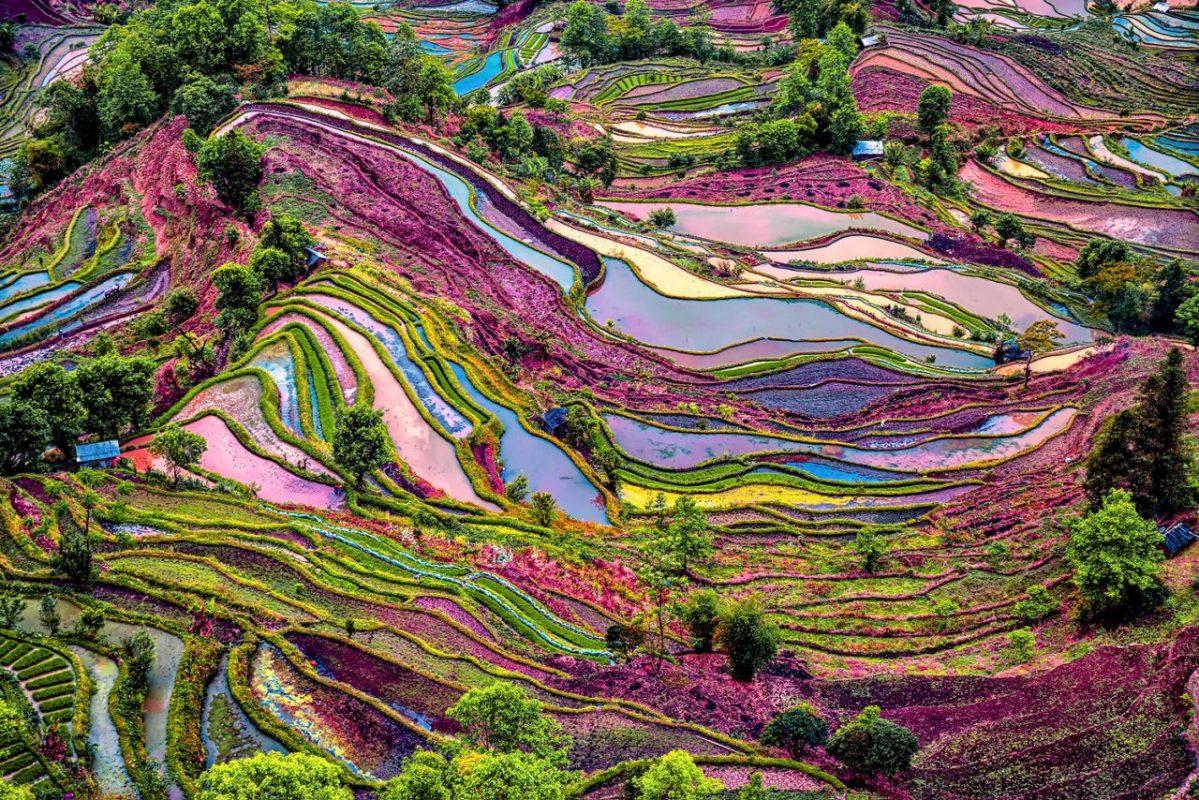 Multi-coloured Yuanyang Rice Terraces