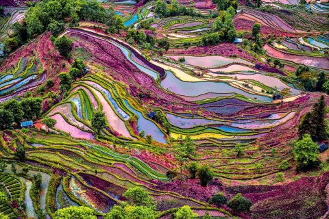 Best Places to Visit in China: Multi-coloured Yuanyang Rice Terraces