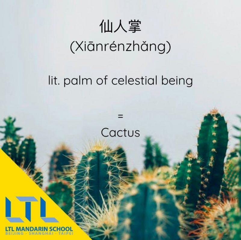 Cactus in Mandarin