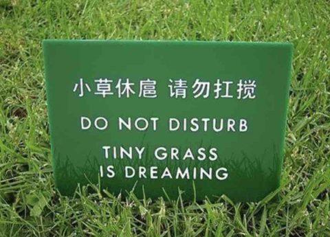 Tiny Grass having a dream