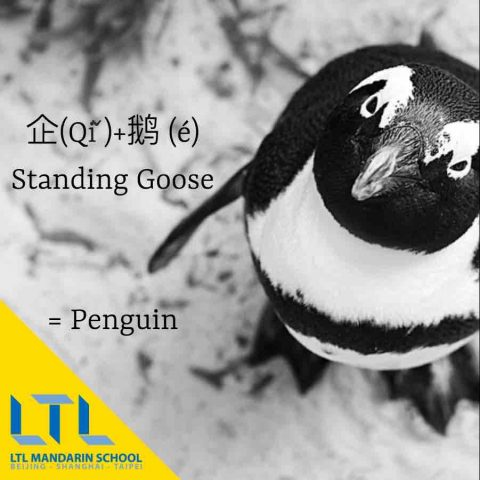 Penguin in Chinese