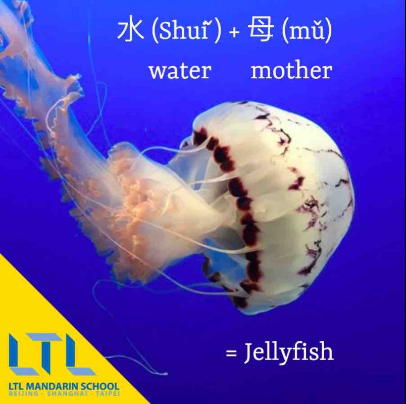 Jellyfish in Chinese