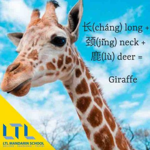 study mandarin - Giraffe