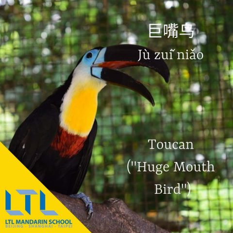 Toucan in Chinese