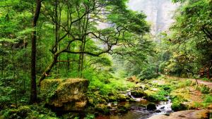 Hike through Zhangjiajie - One of China's most beautiful sights